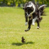 A Jump of Joy